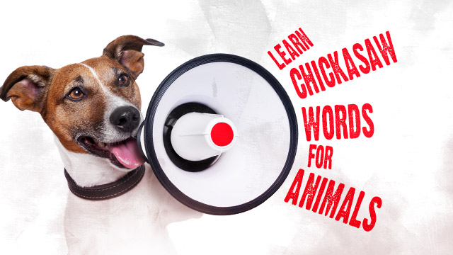 Language : Learn Chickasaw Words for Animals
