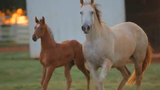 Economic Impact: Oklahoma Horse Industry
